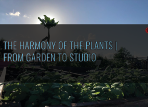 The Harmony of the Plants From Garden to Studio